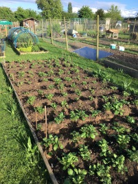 allotments3